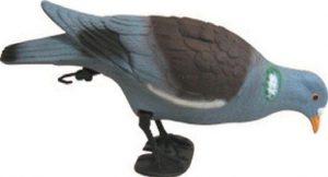 Pigeon picoreur