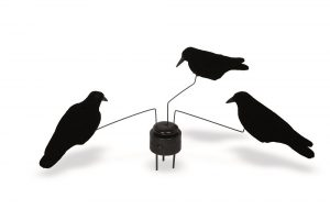 Corbeau manège