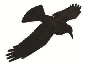 Appelant corbeau ailes ouvertes souples