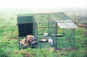 Grande cage à renard